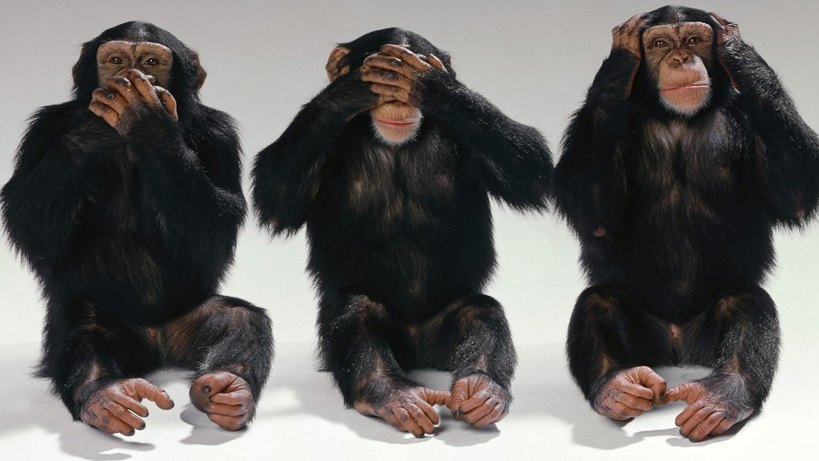 three-wise-monkeys.jpg